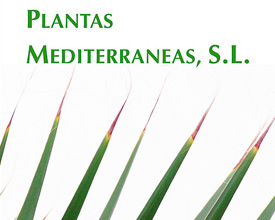 Advertisement 1/2 Plantas Mediterráneas